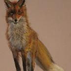pastel painting pastellmaal loomad animals rebane fox Keiu Kuresaar
