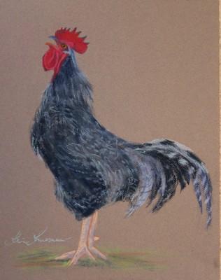 pastel painting pastellmaal loomad kukk 2 animals Keiu Kuresaar